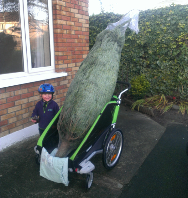 Christmas tree in bike trailer